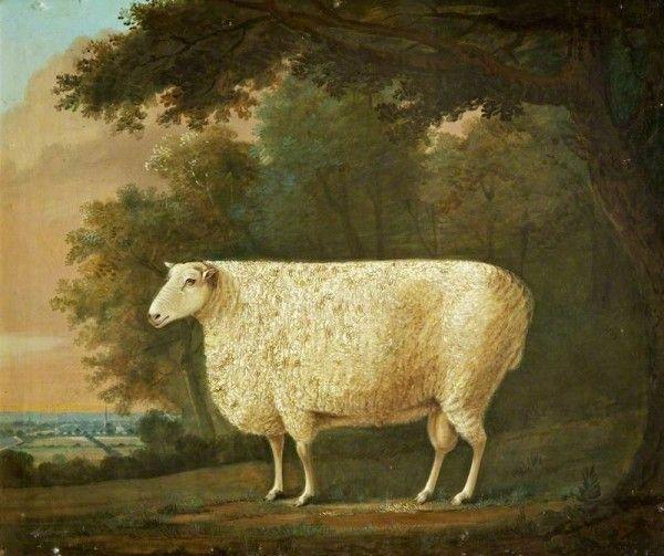Colonial Williamsburg Blog Sheep Paintings Art Art Uk