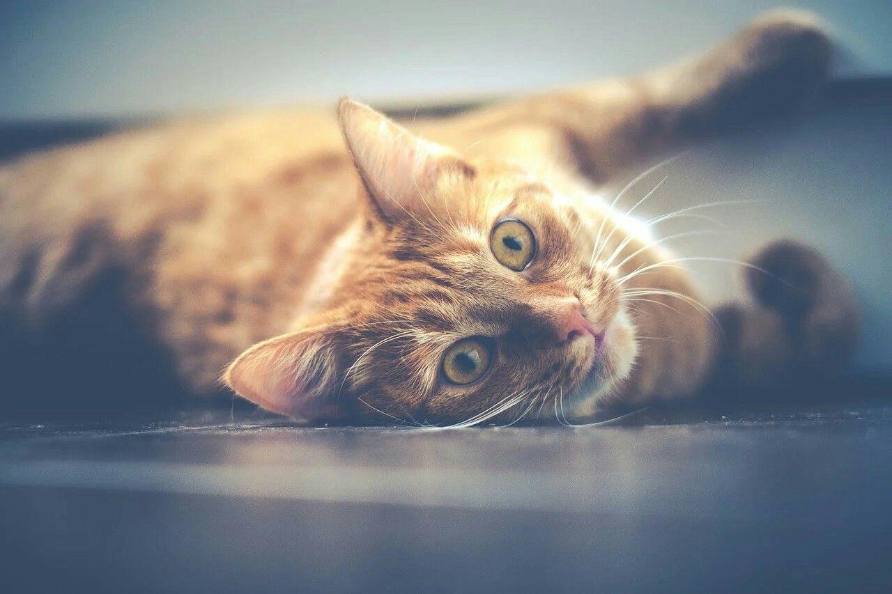 Pin Oleh Heni Dicaprio Di Cute Cat Di 2020