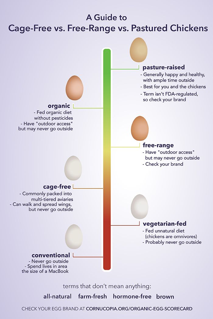 Youu0027re Wasting Your Money on Cage-Free Eggs Hereu0027s What to Buy - fresh primal blueprint omega 3