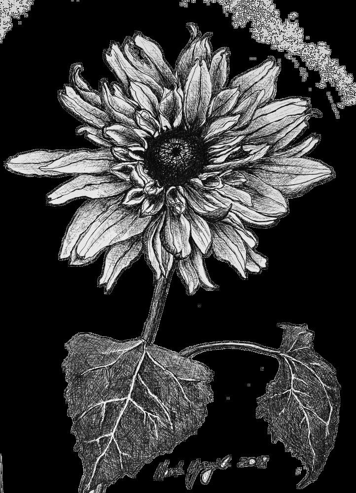 Pin By Tammy Mitchell On Tattoo Ideas In 2020 Sunflower Sketches Flower Art Sunflower