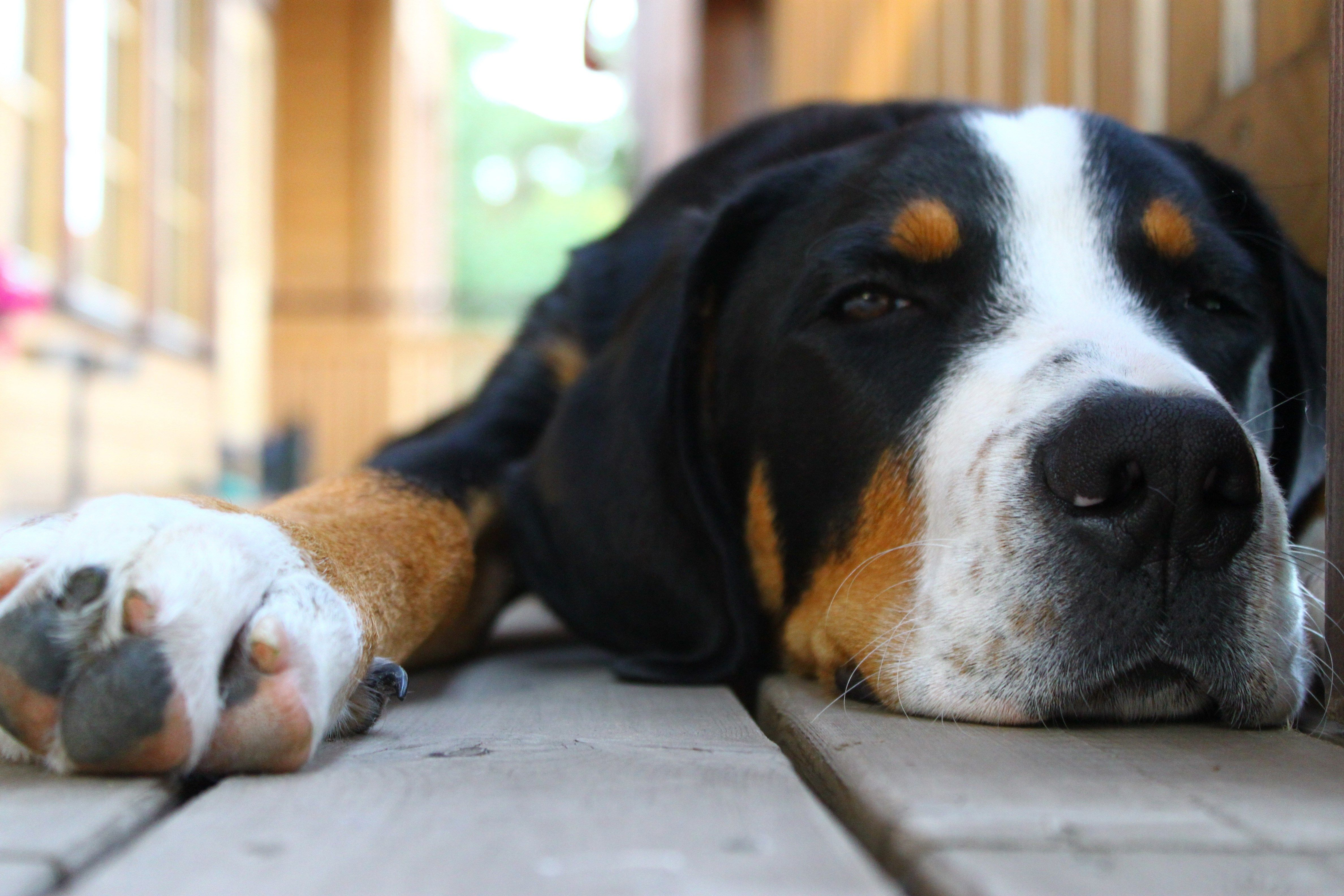 Pin by ololo on sharovarka pinterest dog