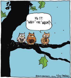 How Owls Get Their Wisdom Funny Cartoon Pictures Funny Christmas Cartoons Funny Owls