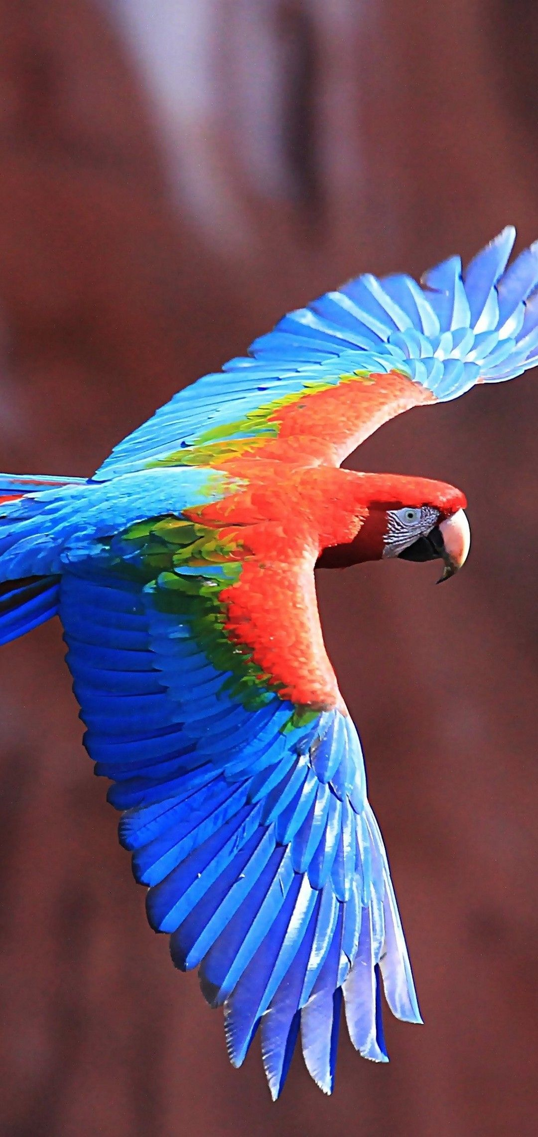 Red-And-Green Macaw Wallpaper - [1080x2280]
