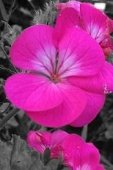 Having A Personality Color Pink Means You Are Loving Kind Generous And Sensitive To The Needs Of Others