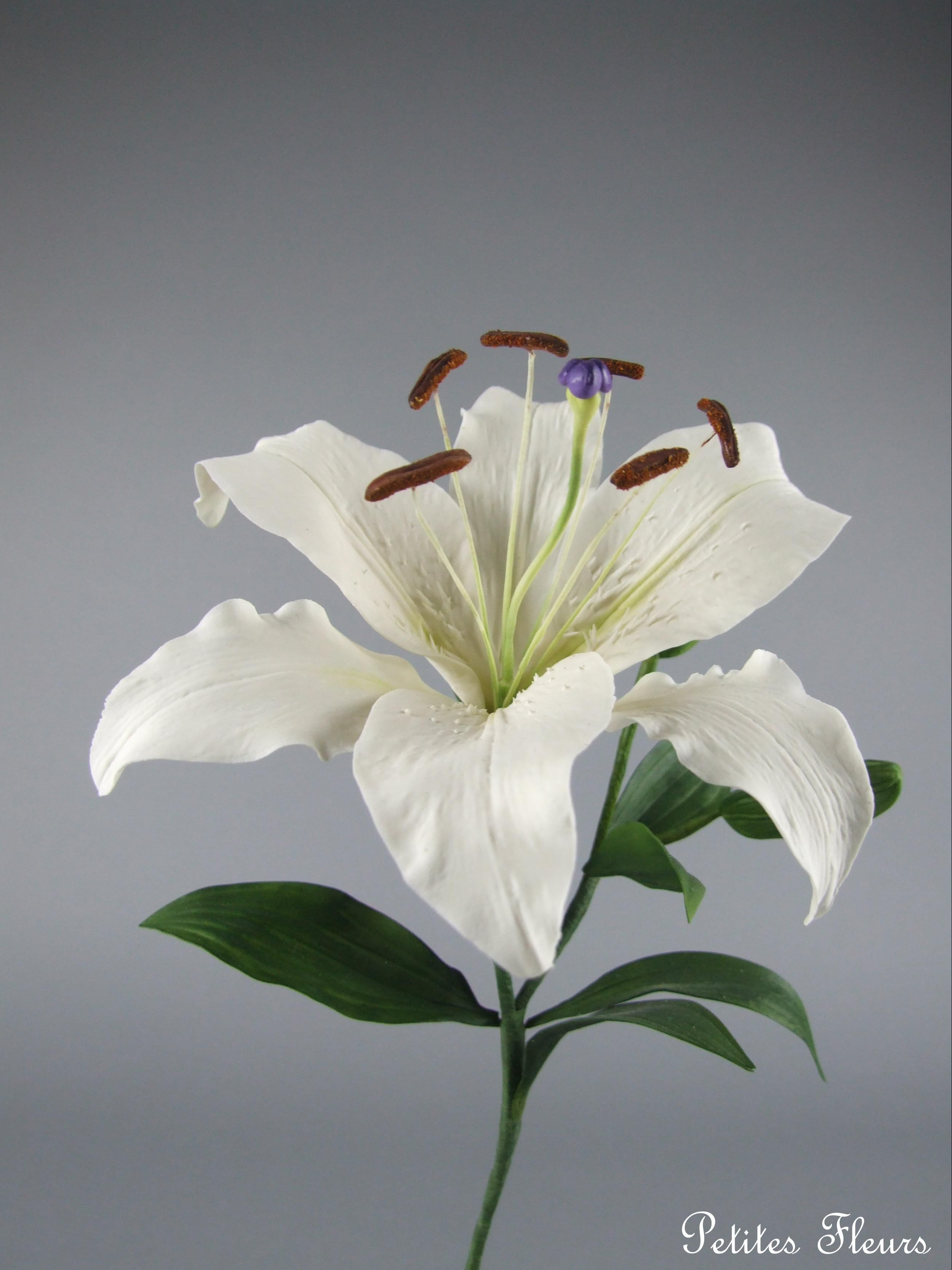 Gumpaste casablanca lily sugar flower garden pinterest sugar gumpaste casablanca lily izmirmasajfo