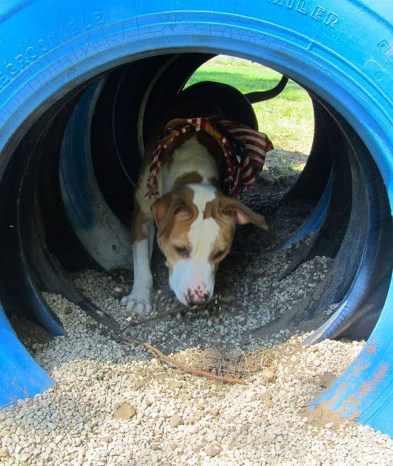 Diy Backyard Ideas For Dogs: DIY Tire Tunnel - Petdiys.com