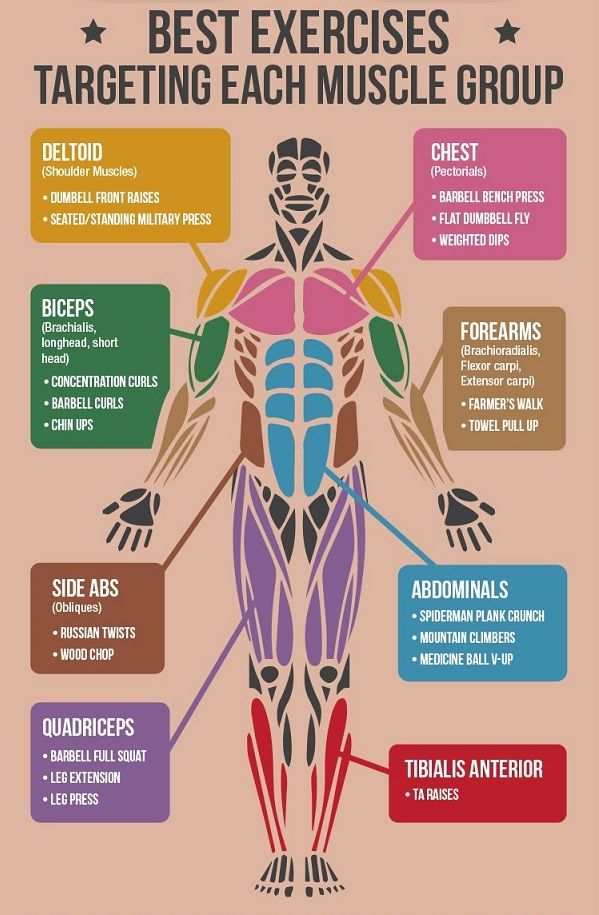 infographic: the 'best' exercises for each muscle group in the, Muscles