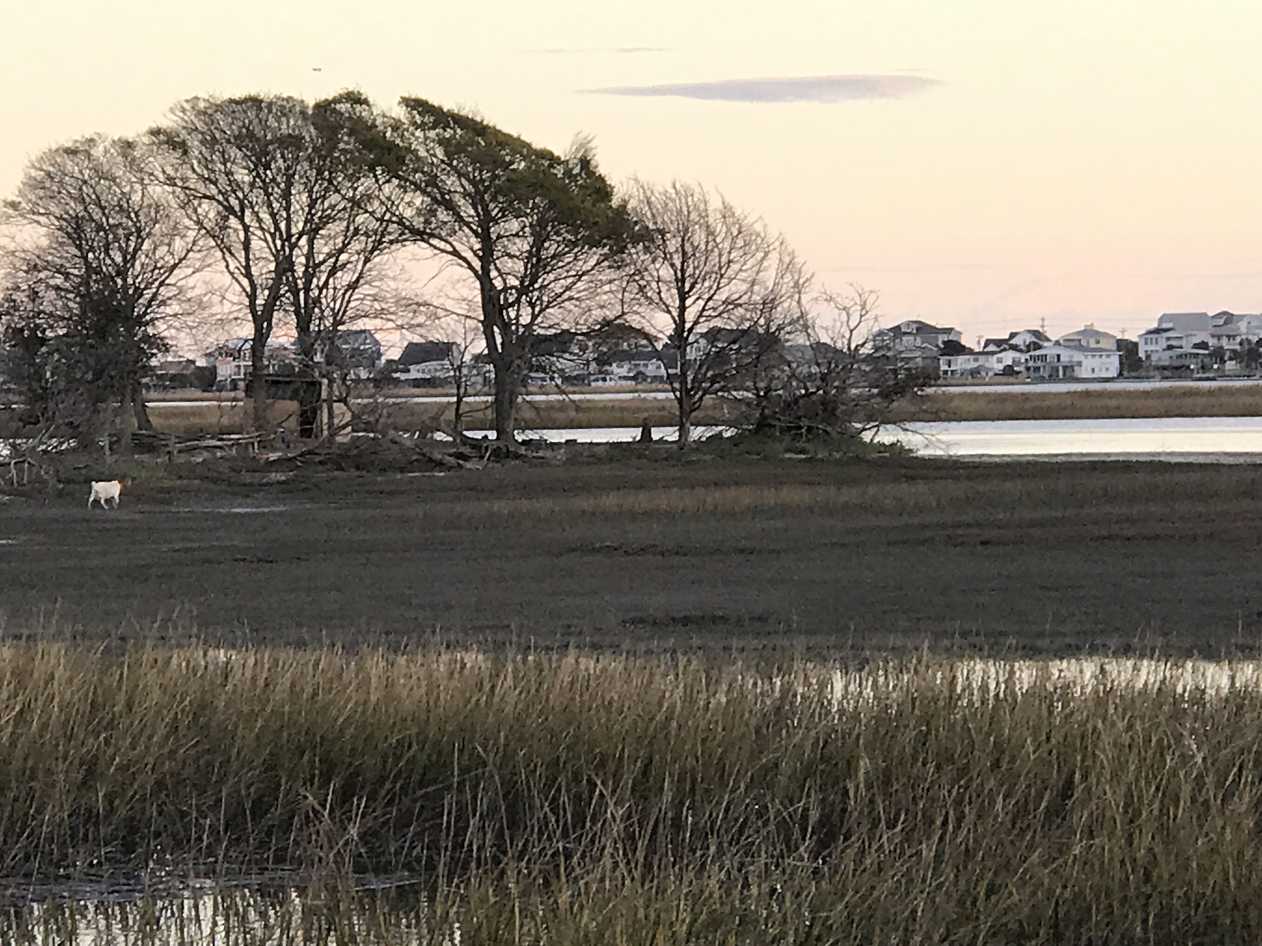 Pin by Myrtle Beach South Carolina Re on Murrells Inlet