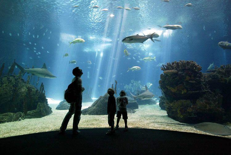 Visita el mejor acuario del mundo en Lisboa