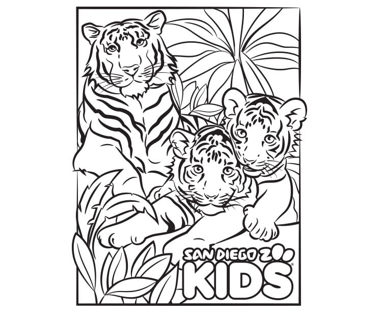 Coloring Page Tiger Family San Diego Zoo Kids Elephant Coloring Page Coloring Pages Color