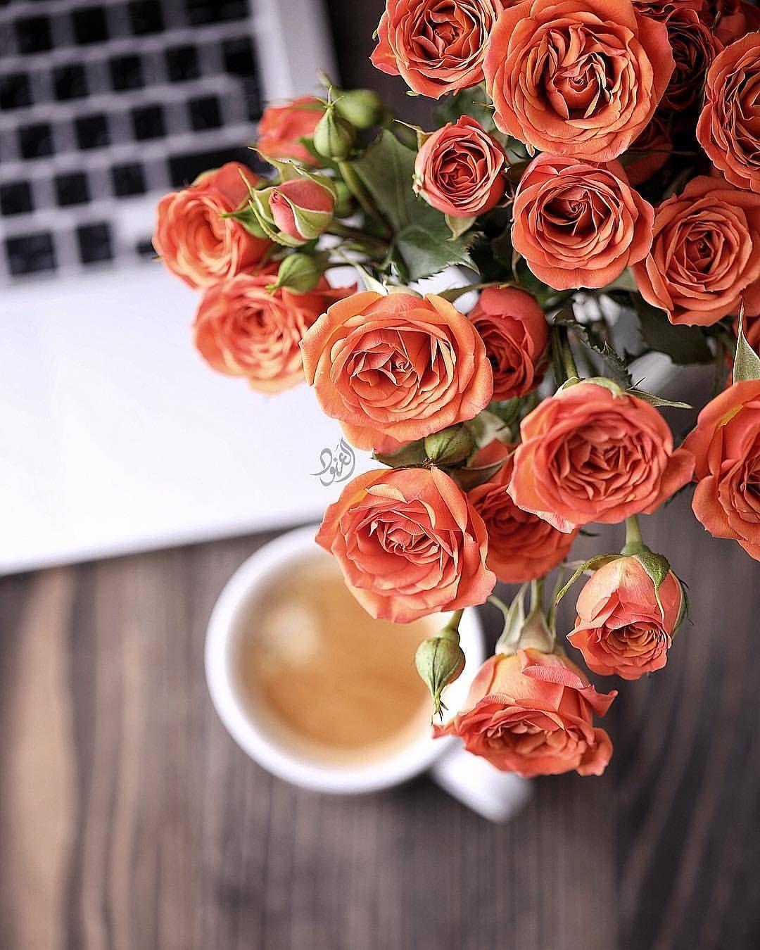 ㅤ مساء الورد ㅤ By Alanoodmaljaber ㅤ ㅤ أ لترشيحها كصورة الاسبوع متابعبتعليق منفصل 10 ب التقييم مـن 5 ــــ Flower Tea Coffee Vs Tea Coffee And Books