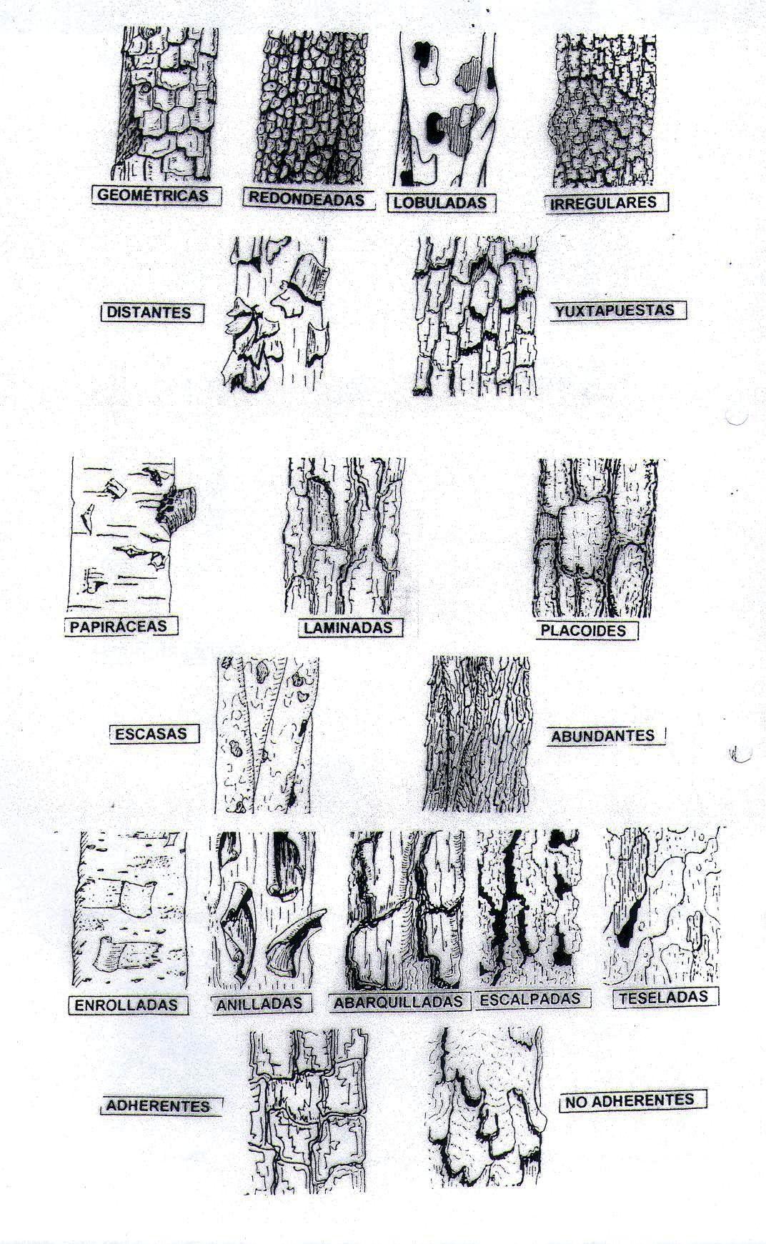 Tipos De Corteza De Arboles En