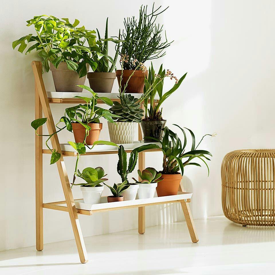 Decoratie Planten Binnen.Plantenrek Interior In 2019 Woonkamer Decoraties Tuin En
