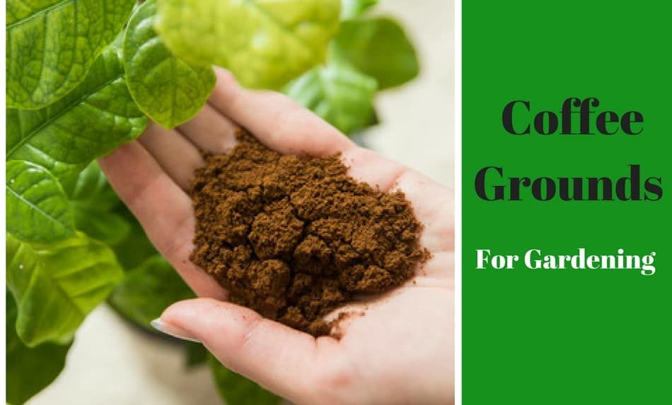 When You Re The Only One You Know Going Zero Waste Remember This The Zeroish Co Coffee Grounds Uses For Coffee Grounds Coffee Grounds For Plants