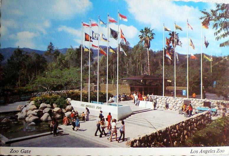 1966 L A Zoo Los Angeles Zoo Los Angeles History Los Angeles