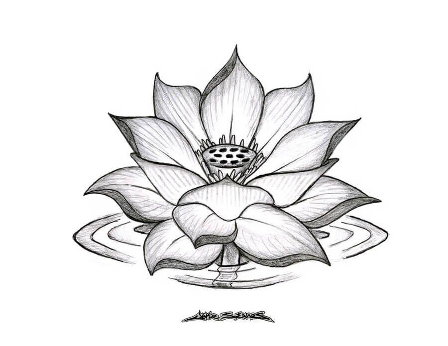 Gambar Batik Bunga Yang Mudah Dan Bagus 15 Gambar Sketsa Bunga Dari Pensil Yang Mudah Dibuat Contoh Gambar Motif Batik B Di 2020 Bunga Teratai Sketsa Lukisan Bunga