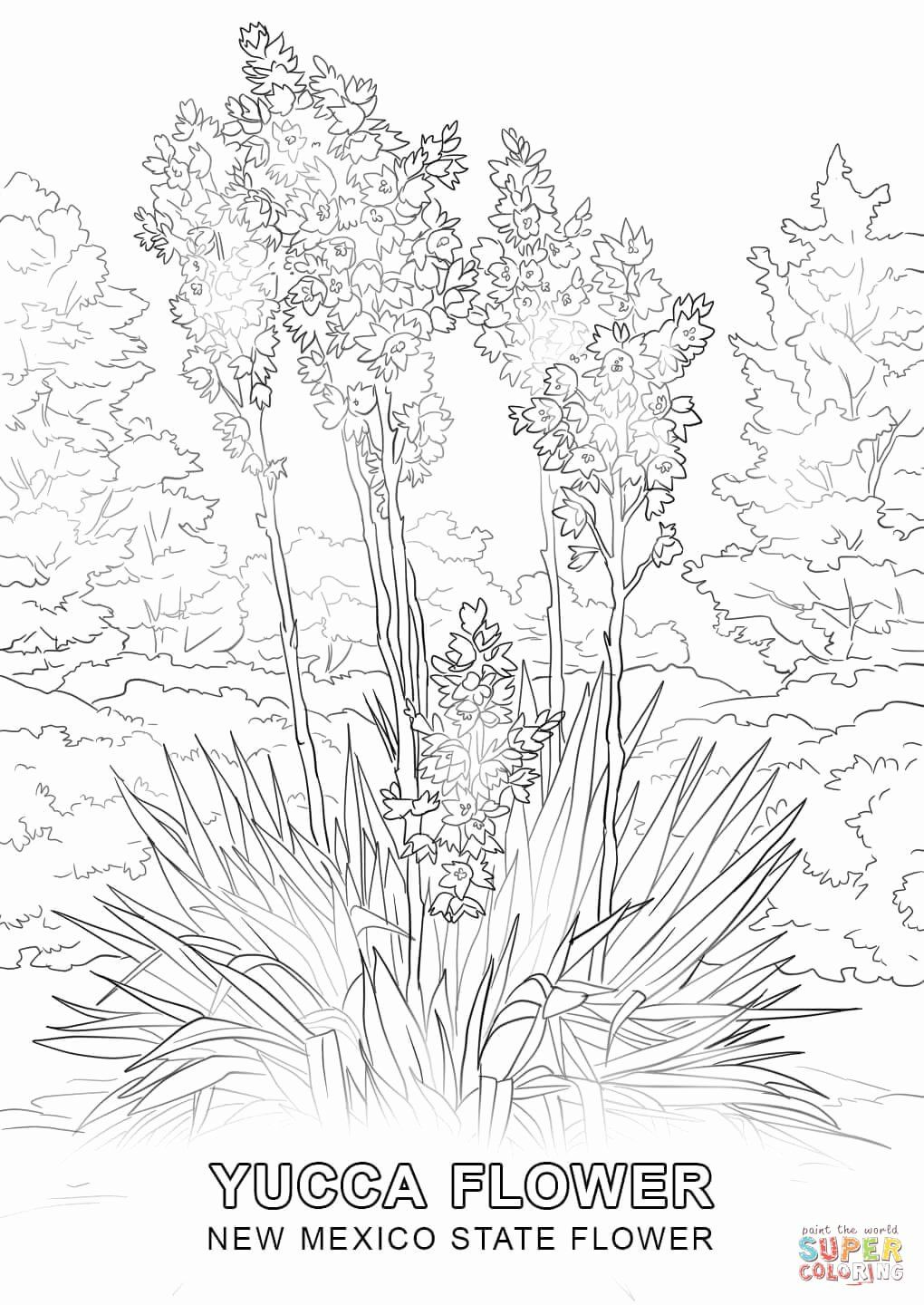 State Flower Coloring Pages Inspirational New Mexico State Flower