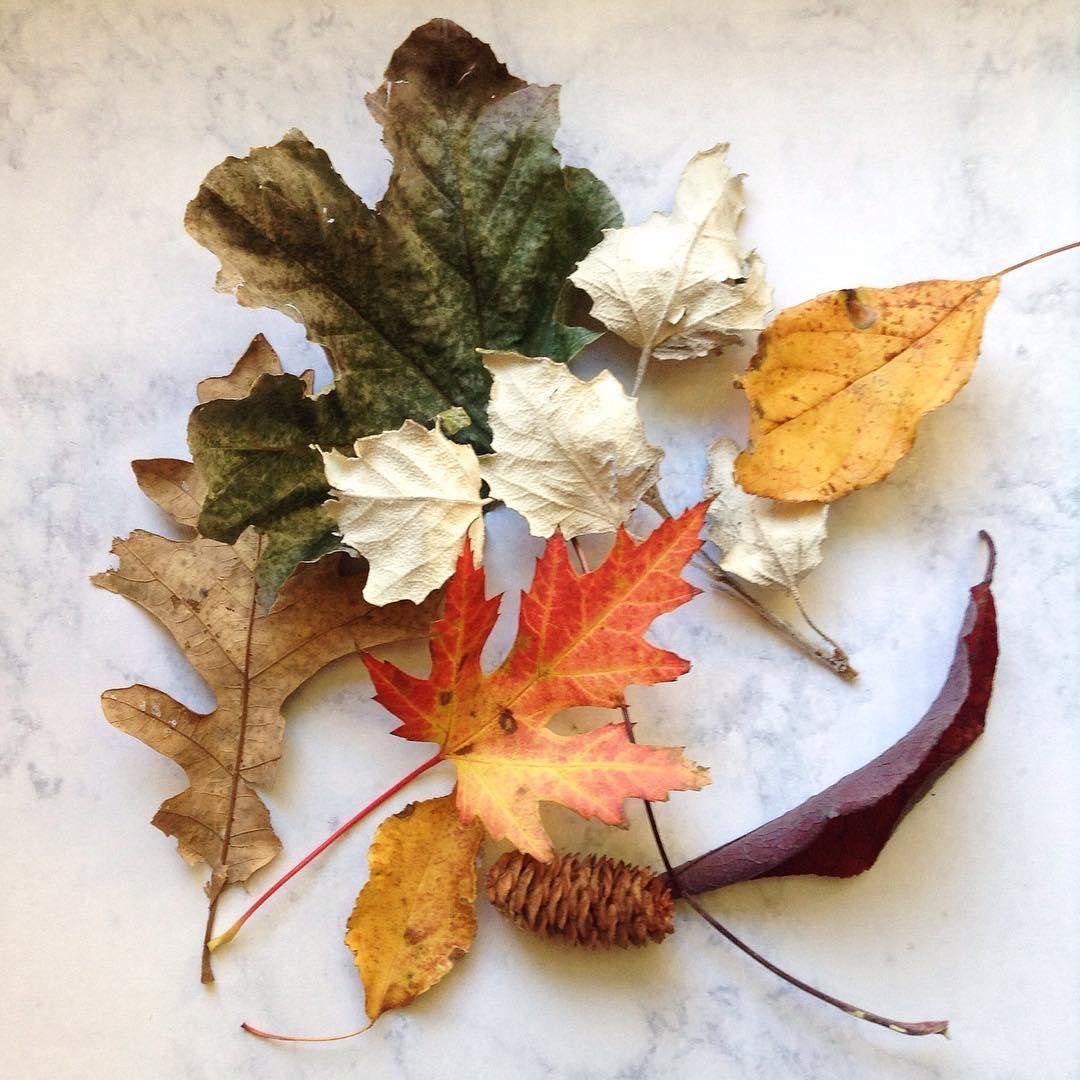 ≡ leaves