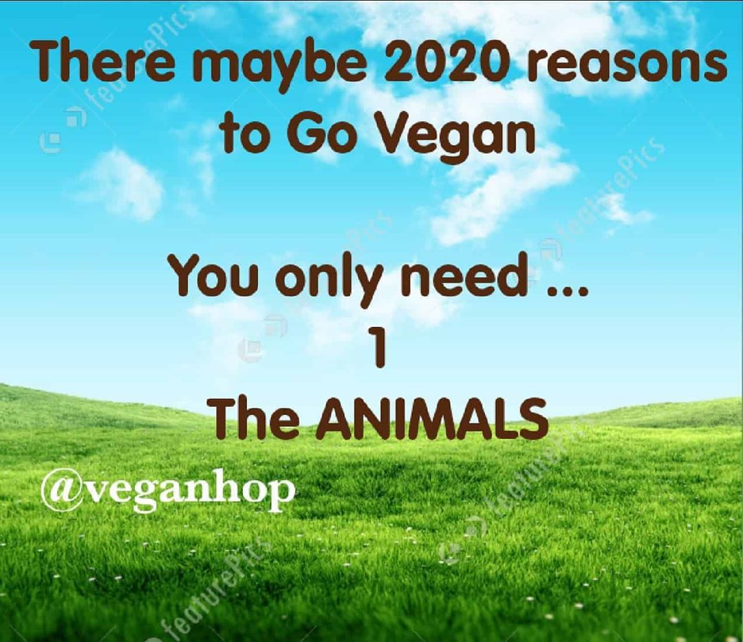 People go vegan for so many different reasons and that's great.  The only reason to go Vegan anyone
