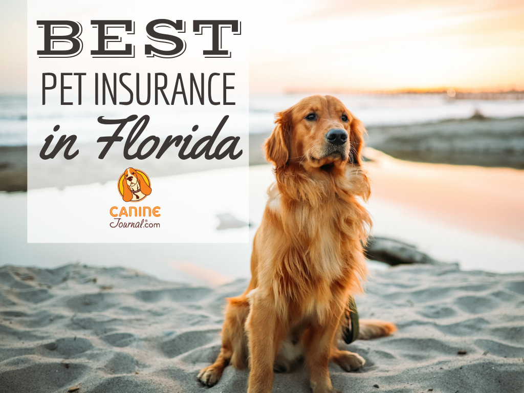 Best Pet Insurance In Florida Compare Plans & Prices
