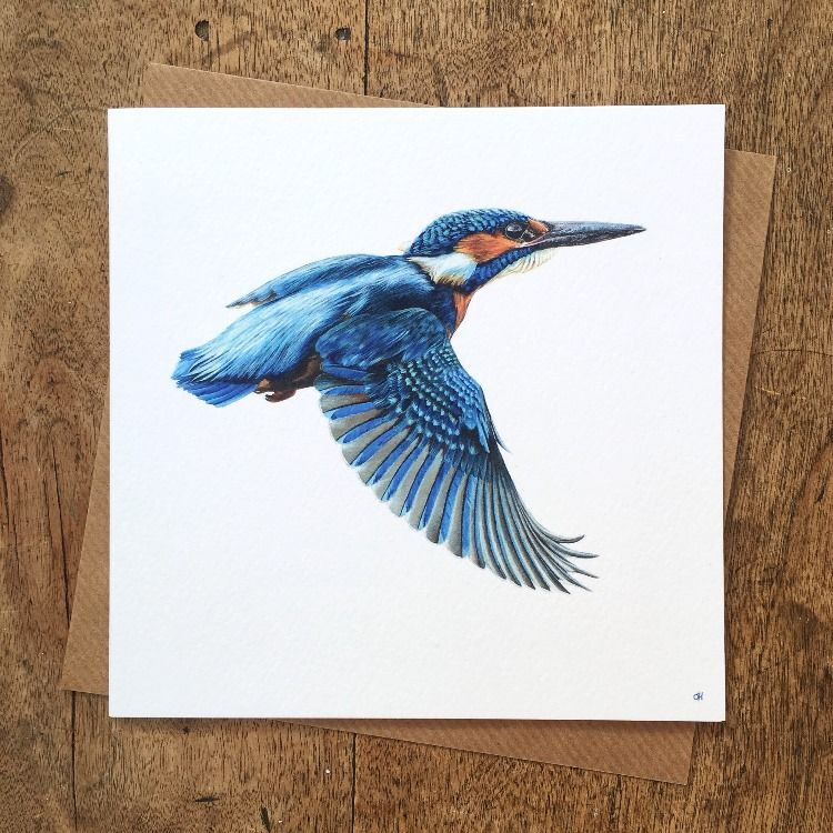 kingfisher greetings card from a paintingolivia de