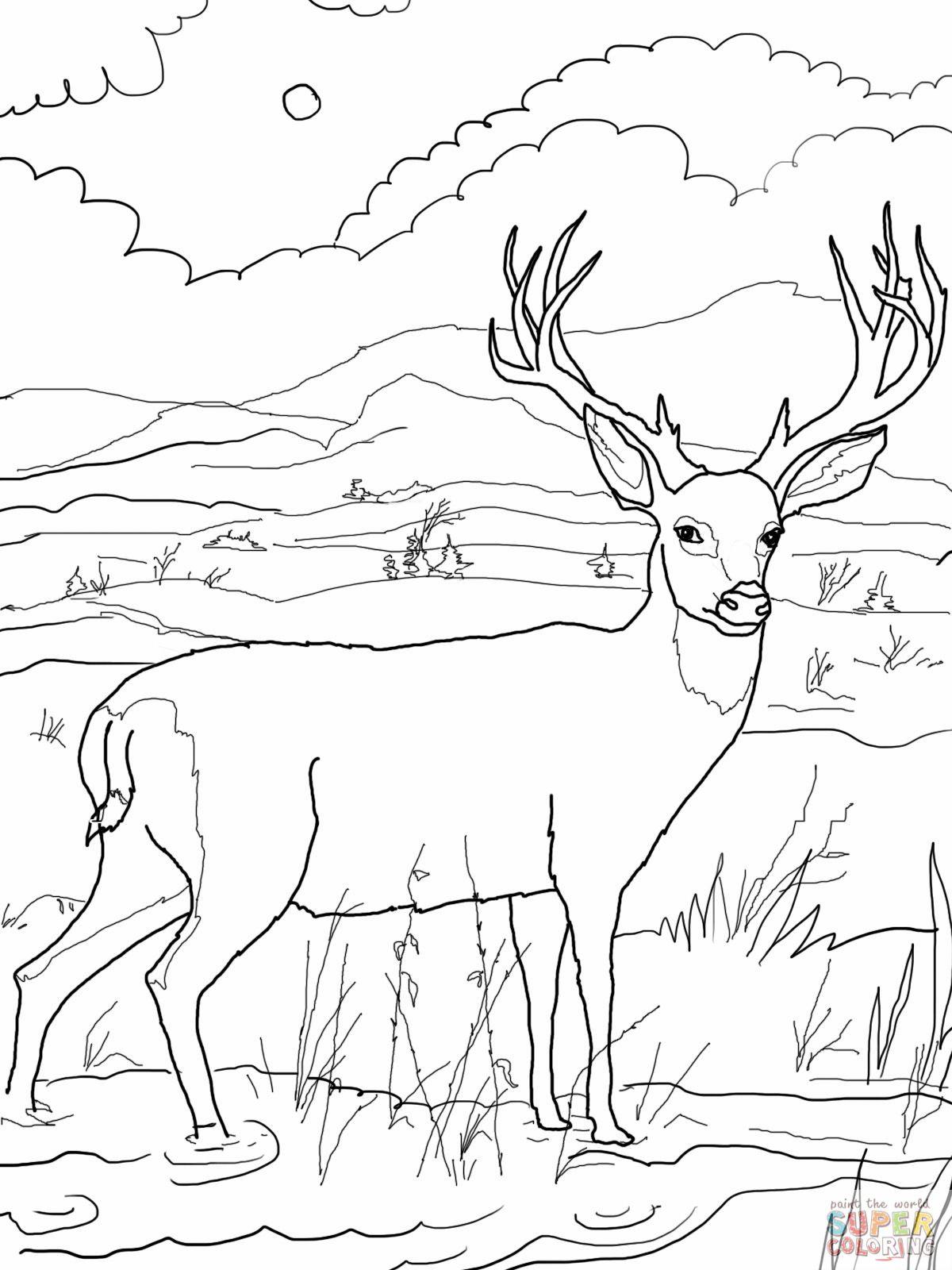 Deer Coloring Pages Blacktail Mule Deer Coloring Online Super