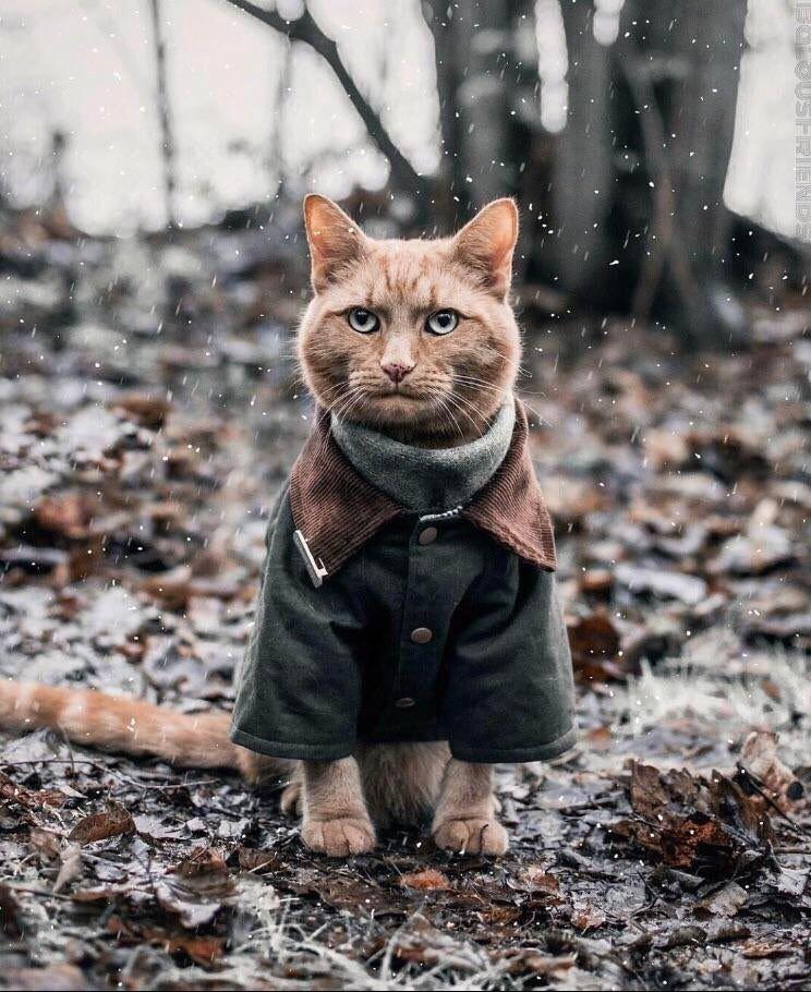 41 Strange On Twitter Cute Cats Cat Lovers Animals