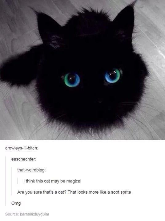 Warte, warte. Das ist eine Katze? Beeindruckend! Das muss doch photoshopping sein oder ?! Schnurren ... - Katzenbabys/ Katzen - #Beeindruckend #Das #doch #eine #ist #Katze #Katzen #Katzenbabys #muss #oder #photoshopping #Schnurren #sein #Warte #animalesbebébonitos