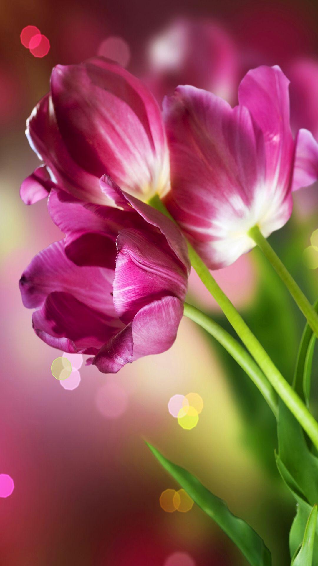 Flowers Beauty Beautiful Flowers Wallpapers Flower Iphone Wallpaper Flower Images Wallpapers