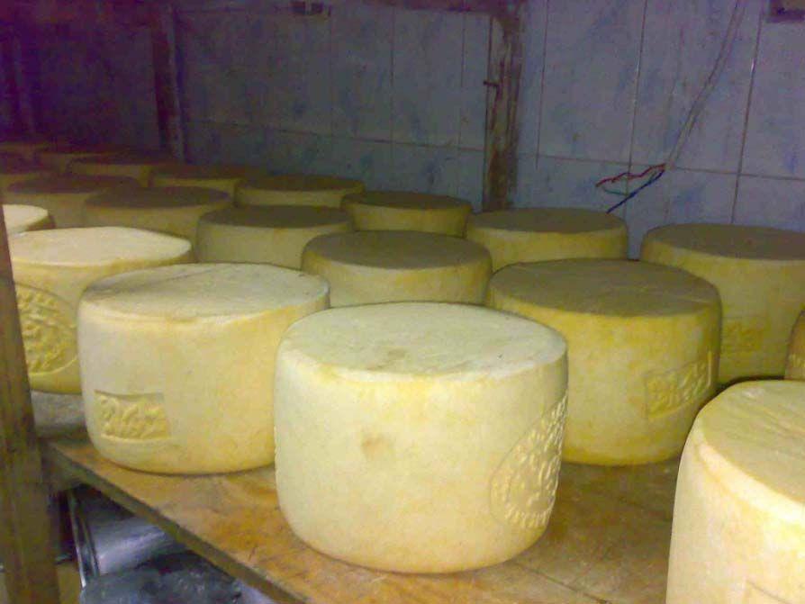 دراسة جدوى مصنع جبنة رومى ماكينة تصنيع الجبن الابيض سعر ماكينة تصنيع الجبن مصنع جبنة فى مصر صناعة الجبن الابيض في مصر تكلفة انشاء Cheese Factory Cheese Factory