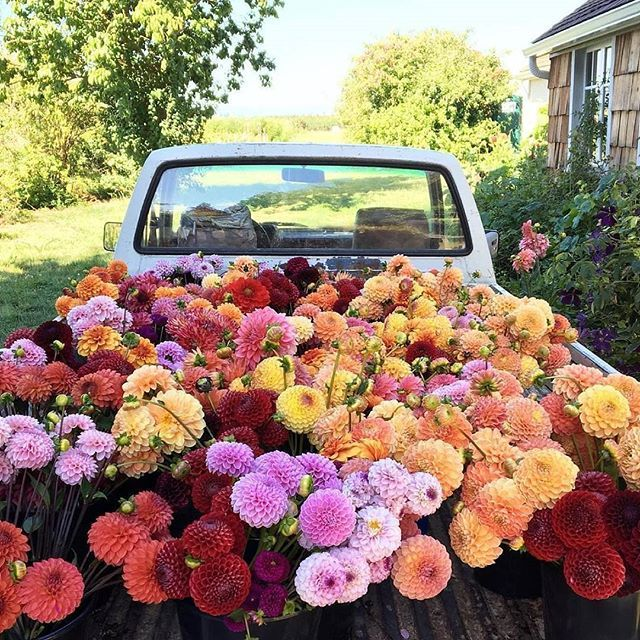 Imagine Spotting This Truck Full Of Flowers Driving Down A Country Road Clscenery Flowergram Floweroftheday Regram Planting Flowers Flower Farm Plants