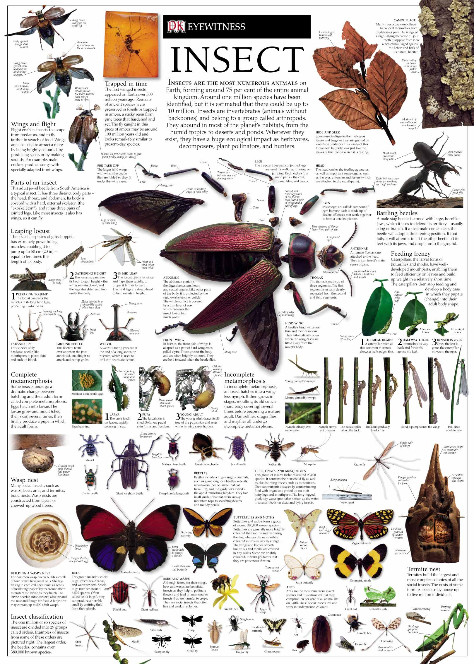 Insect Wall Chart I Want One