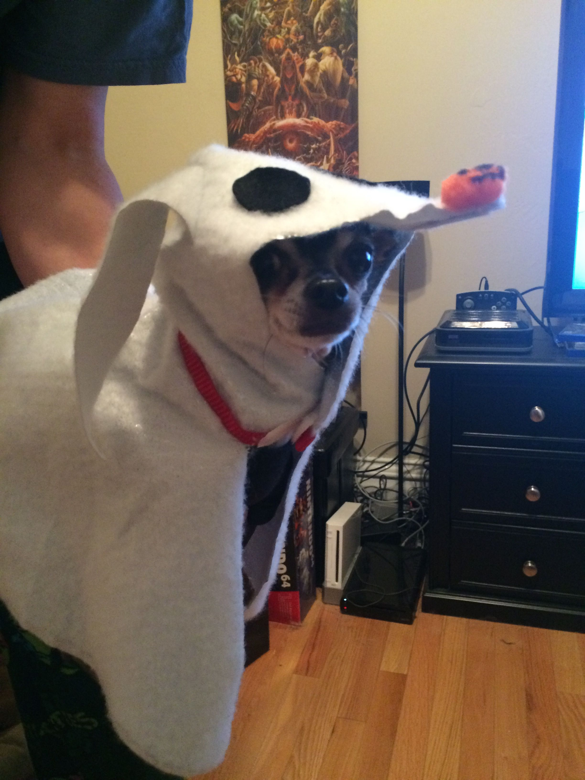 Zero Dog Costume-Nightmare Before Christmas, Modeled by T-Rex | Fall ...