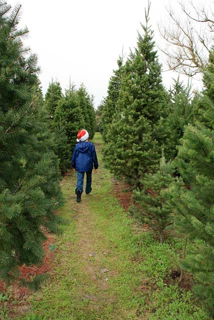 Pin On Christmas Tree Farm