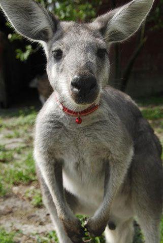 Unusual Pets That Are Legal To Own Unusual Animals Cute Wild Animals Australia Animals