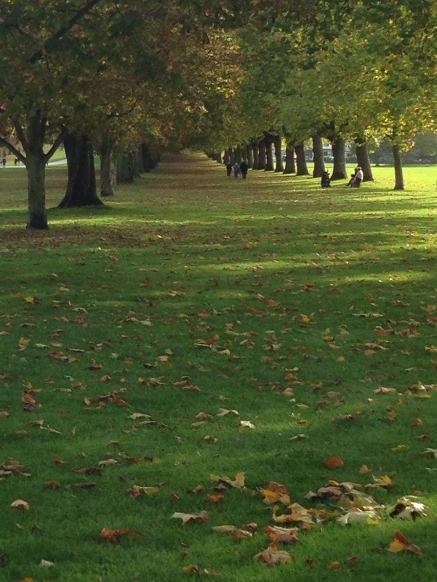 Windsor great park autumn