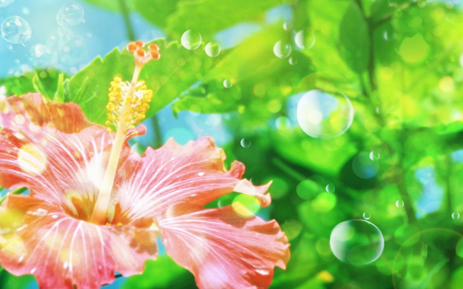Hd wallpaper to download - Download Hd Flower Wallpaper