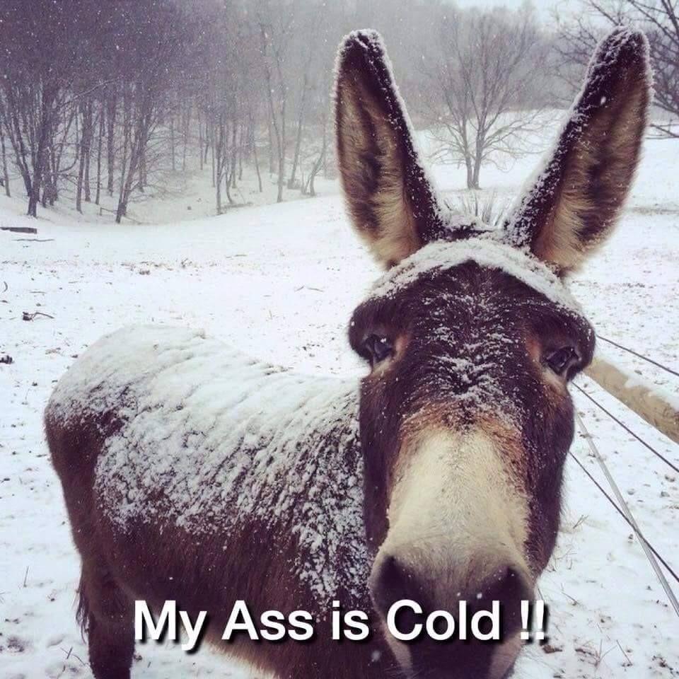 Super donkey ass