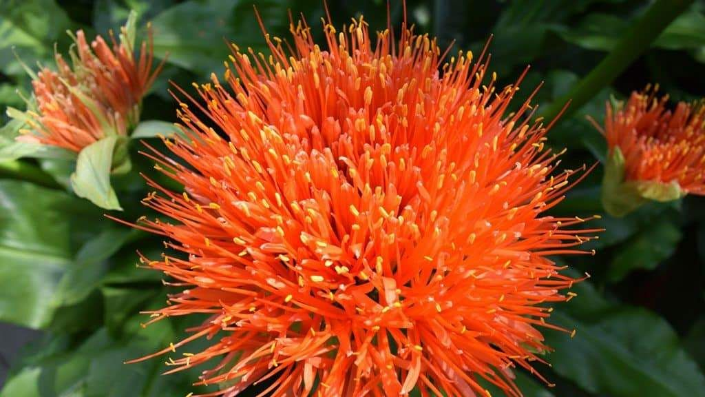 The Energetic And Health Benefits Of Safflower Oil Coconut Health Benefits Fruit Health Benefits Stomach Ulcers