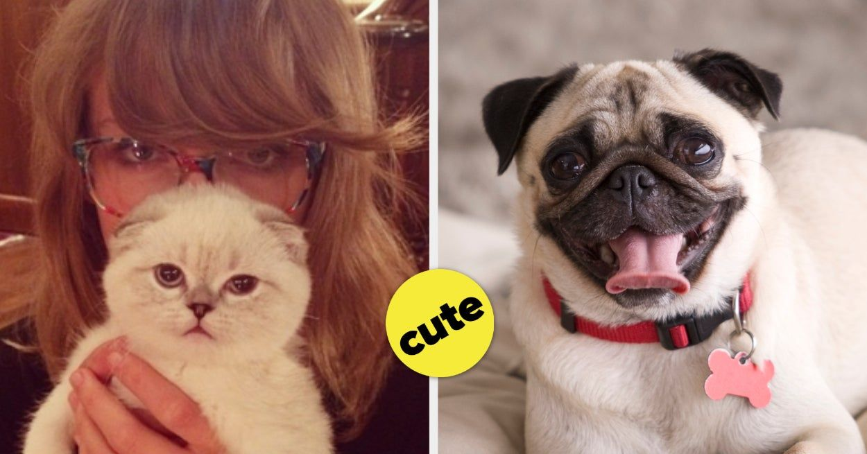 This Dog Quiz Will Reveal What Kind Of Adorable Cat You Should