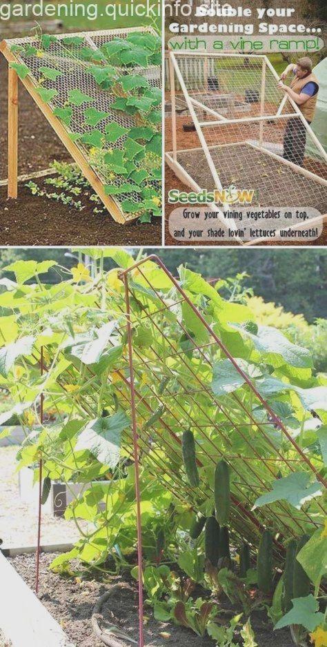 19 erfolgreiche Wege zum Bau von DIY-Gerüsten für Gemüse und Obst #erfolgreich #veggiegardens