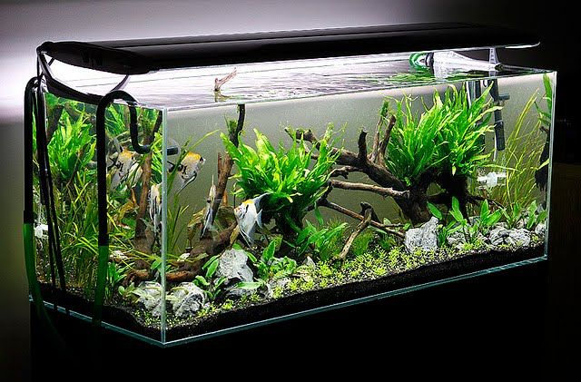 Genial Aquascaping   Aquascape Aquarium   Freshwater Aquarium Plants For