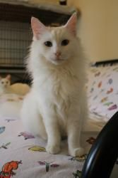 I Found Snowy Adopt Me For Free On Heart Animals Need Homes