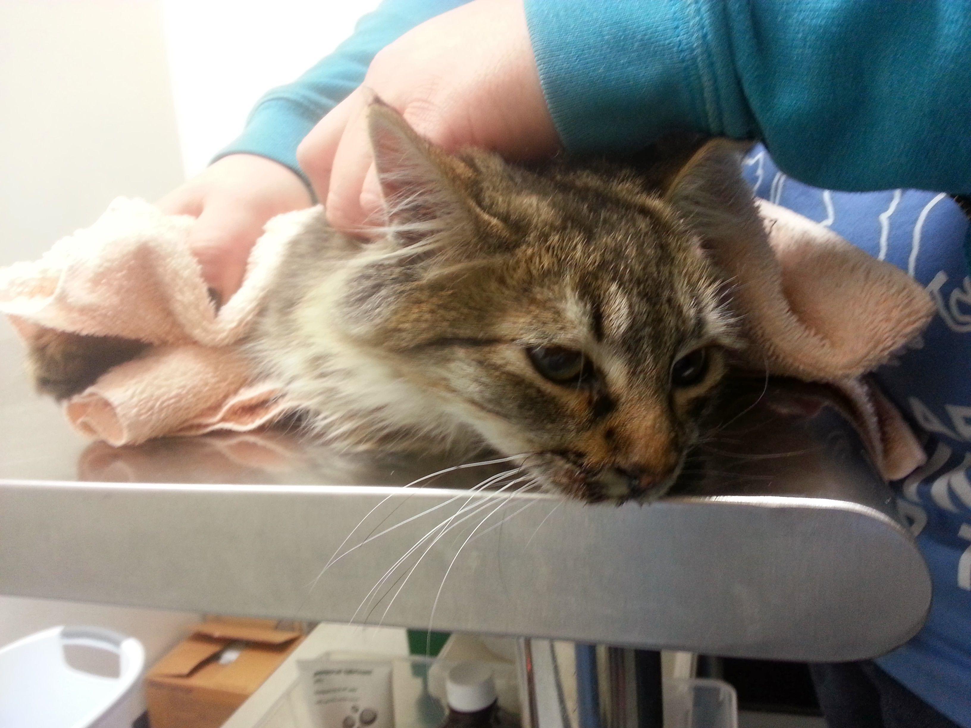 Pin Di Patients Cats