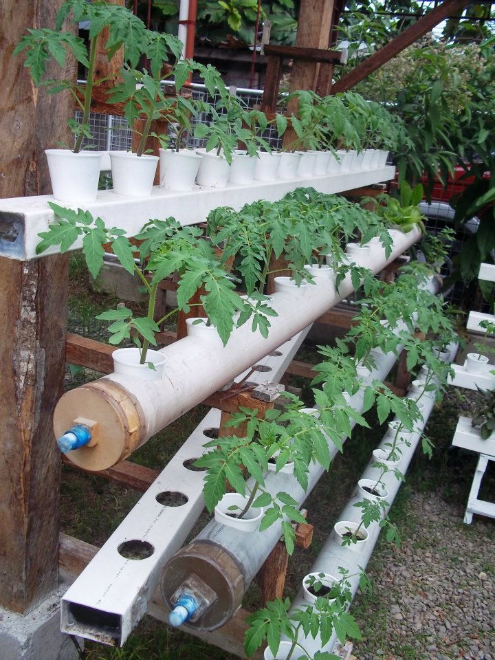 hydroponics tomatoes gartenarbeit pinterest. Black Bedroom Furniture Sets. Home Design Ideas