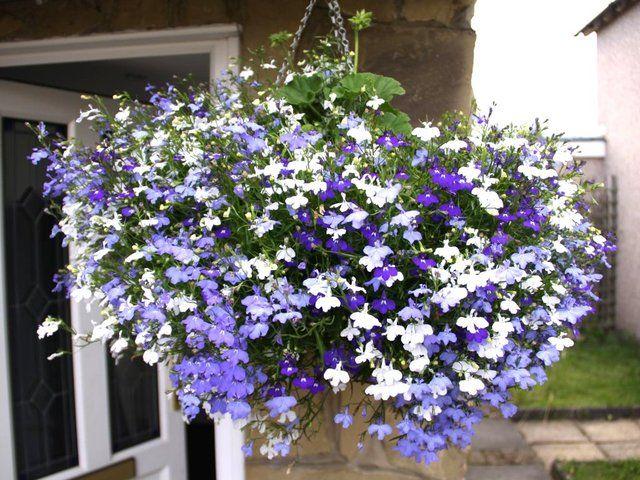 Fleurs Suspendues, Panier, L Été, Fleuri, Balcons, Terrasses, Bricolage,  Jardinage Conteneur, Belles Fleurs