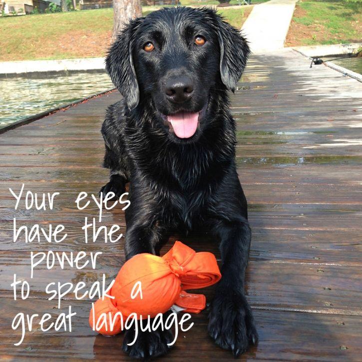 Pure Joy Wise Words Atlanta Lab Rescue Atlanta Pet Portraits