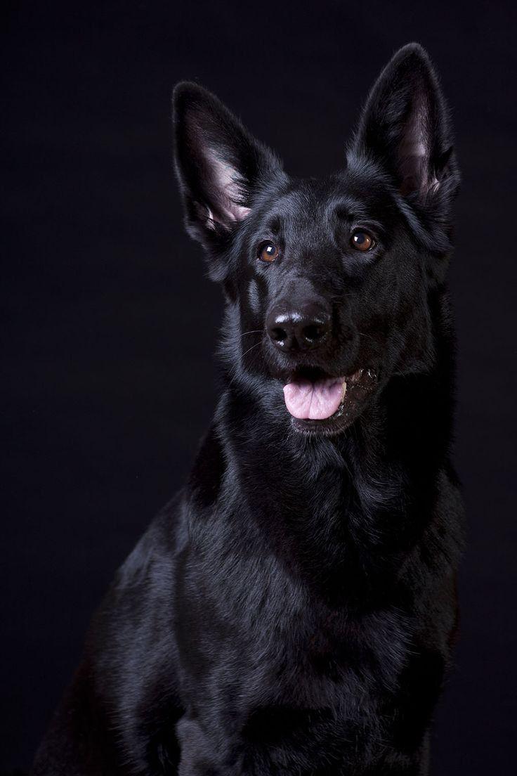 Schwarze hundeBild von Asif Athwal17🇵🇰🇲🇾 auf the_Dogs