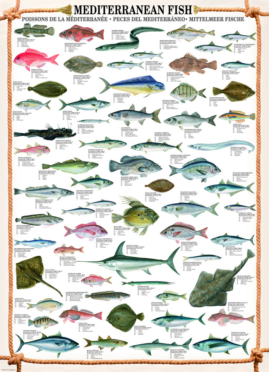 Eurographics freshwater fish 1000 piece puzzle discover for Piece of fish