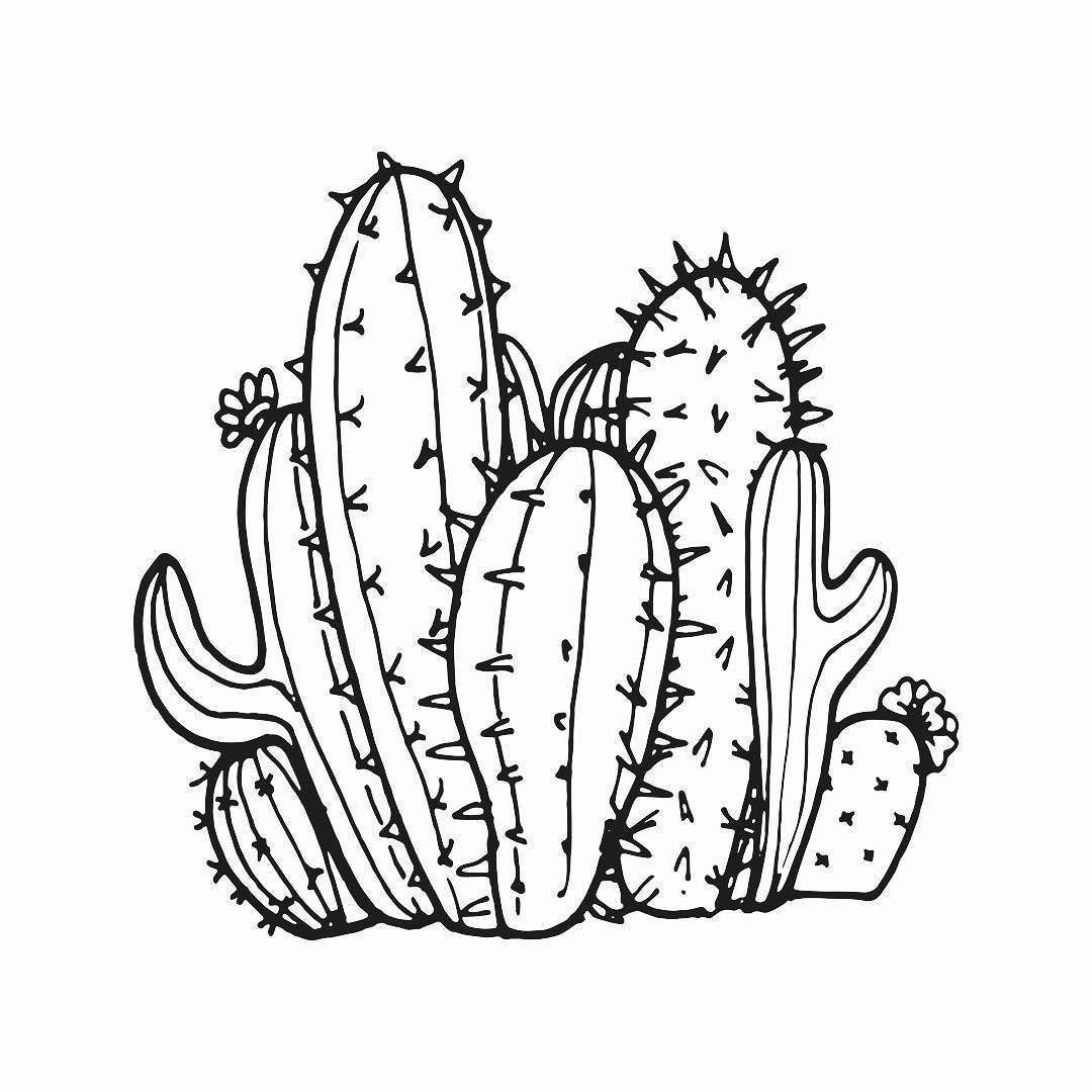 Cactaceae Part of a piece I'm working on. #art #arte #digitalart #illustration #graphicdesign ...